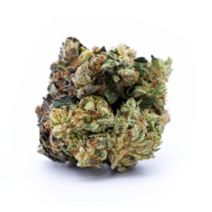 Buy Purple Urkle Weed Strain