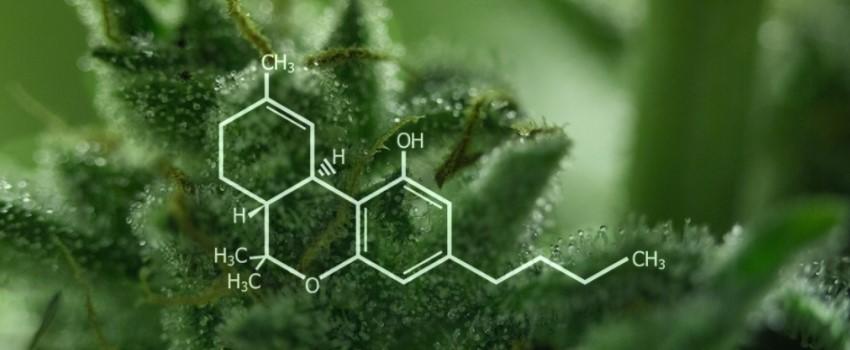 cannabis, what is cannabis