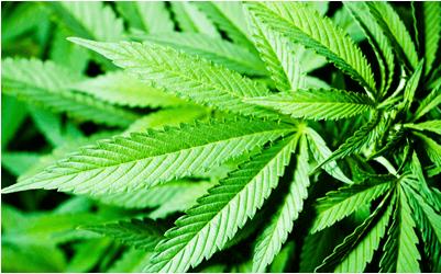 buy marijuana online, buy weed online, buy cannabis online